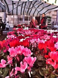 Cremona Spezio Museo del Violino Stradivari mercato dei fiori