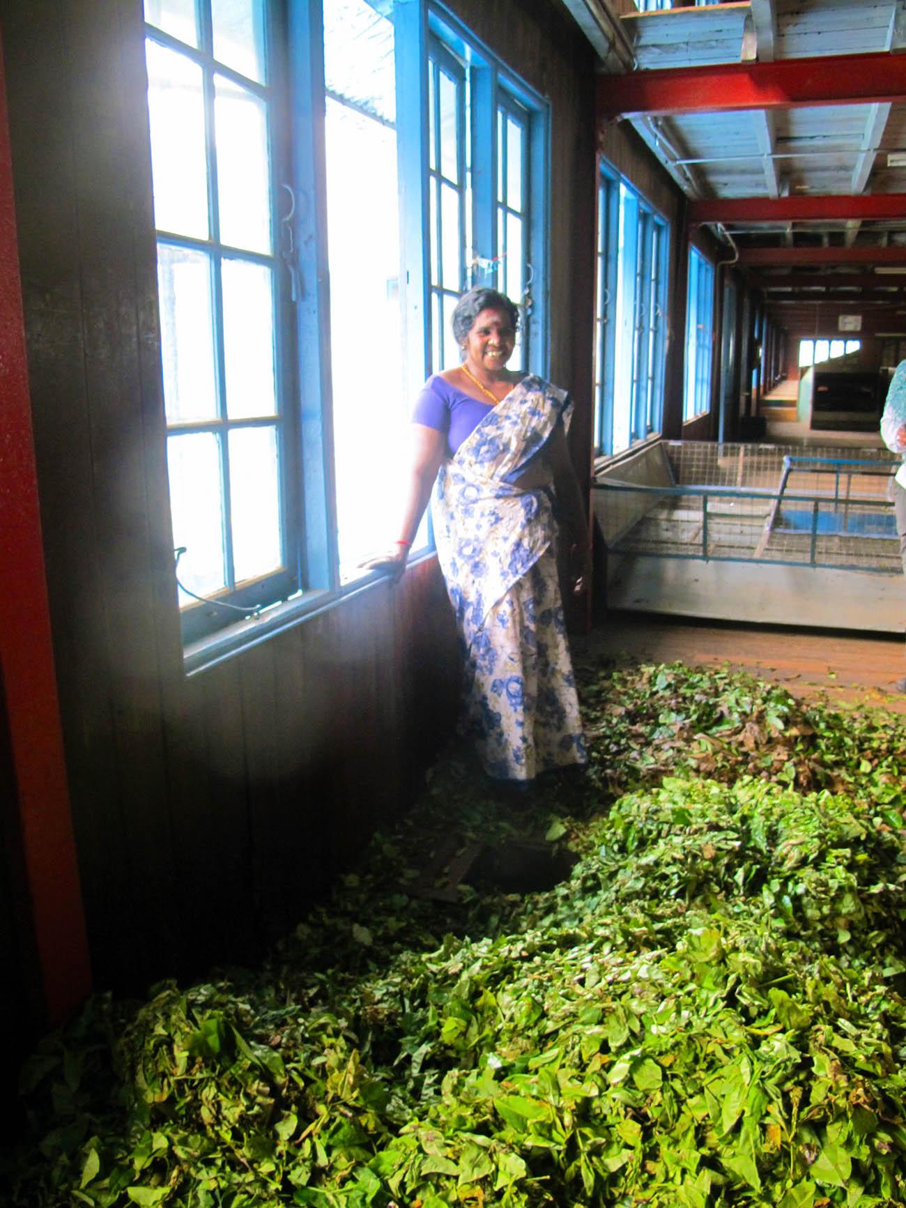 Sri Lanka sui sentieri del tè con Elena fasi produzione