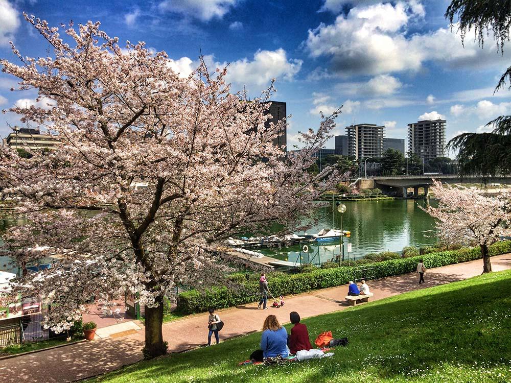 Sakura in Fiore lago Eur Roma