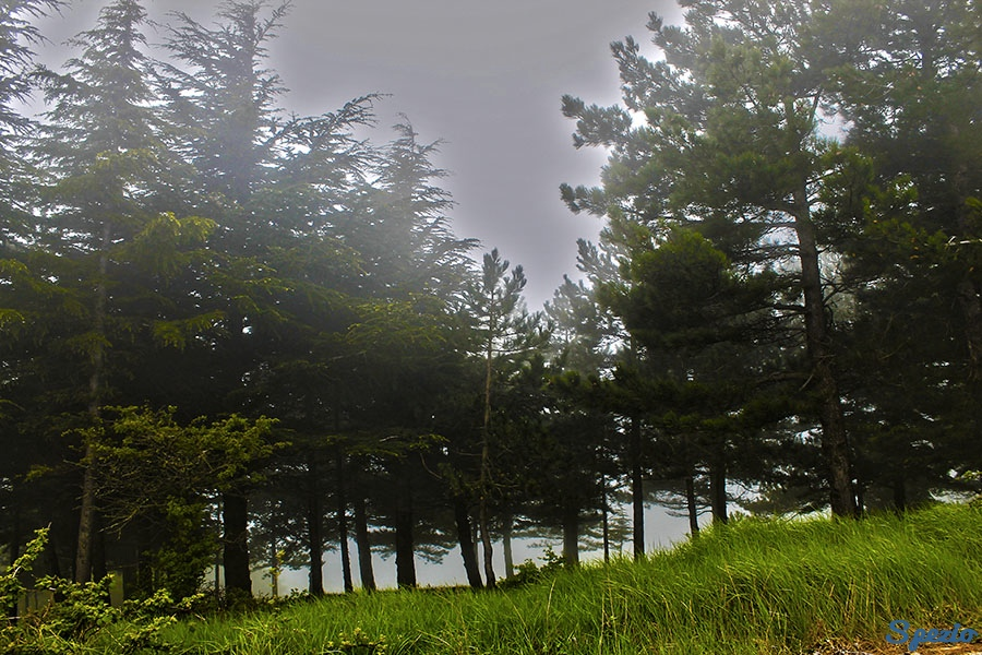 Monti Dauni: la nebbia avvolge gli alberi
