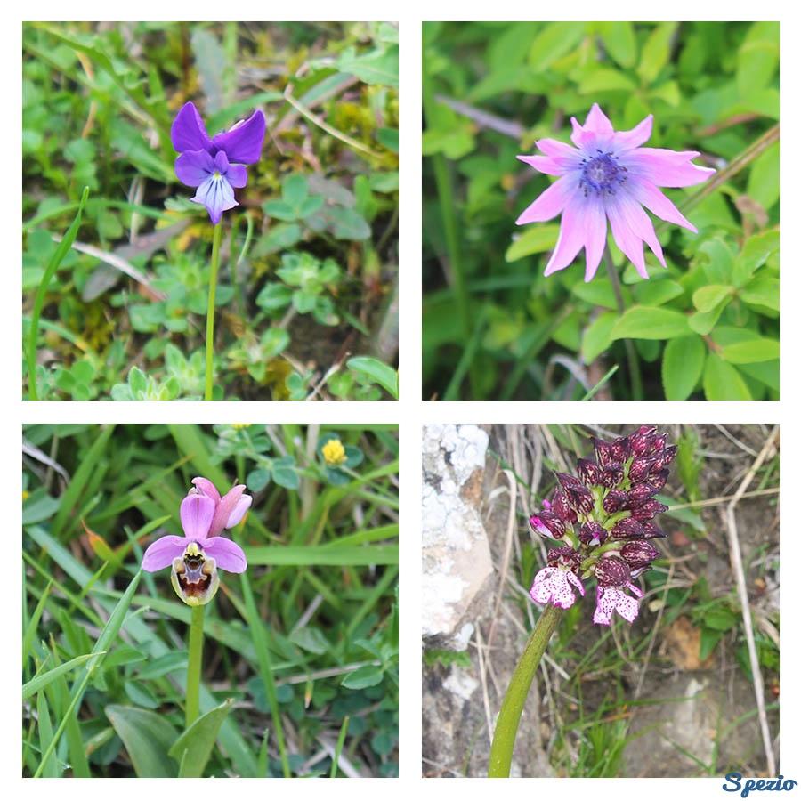 Monti Dauni: i fiori e le piante