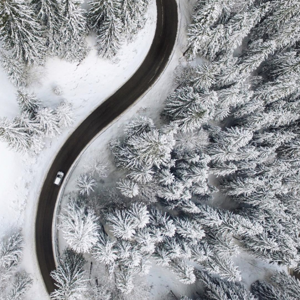#Winter4igers