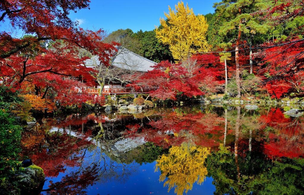 Foliage nel Mondo